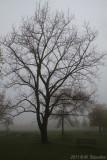 Vanishing in Mysterious Morning Fog