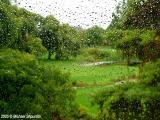 Golfing Rain