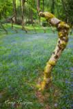 Crocked tree