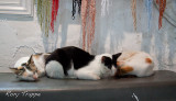 cat nap 2.jpg
