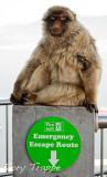 Gibraltar apes -escape route.