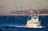 Fishing boat returning to port at Estepona, Spain