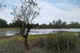 Mangroves in Rantau Abang, Terengganu