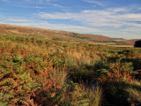 Stanage, late September. Lovely.