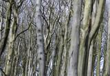 Beech forest.jpg