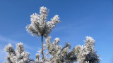 Frost trees Belgium