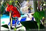 Floral Colours