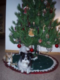 Christmas has gone to the dogs!