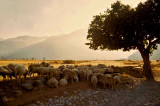 Grèce-132.jpg