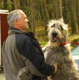 irish wolfhound 2.jpg