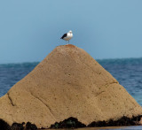 bird on a rock 1.jpg