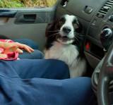 learner driver .jpg