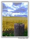 Kingsbarns Farmland