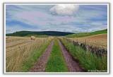 Lumquhat Farm Track