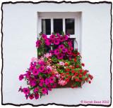 Colourful Window Box