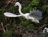 Bird Photos April 2012