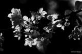 Monochromes