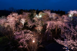 Shougun Tsuka Light Up