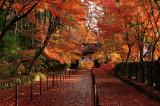 Autumn  - Kyoto & Shiga -