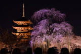 Toji Temple at Kyoto