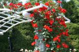 The Kyoto Botanical Garden