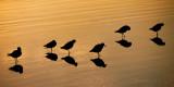 6 Birds