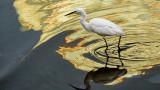 Egret in Color II