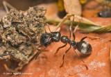 K5D1672-Ant.jpg