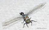 K5D7645-Dragonfly.jpg