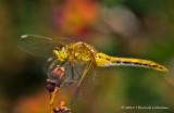 K5D7827-Dragonfly.jpg