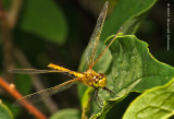 K5D7941-Dragonfly.jpg