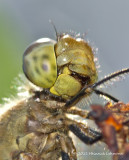 K5D7983-Dragonfly.jpg