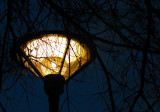 Temora Street Light C