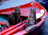 Cats in Boat