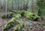 Barrington Moss