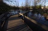 Lotus Pond Cabin View