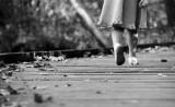Powel Crosley Lake Wooden Walkway Autumn Afternoon