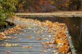 A Leaf Photographer Dream