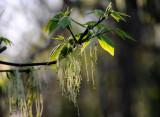 Spring Blooms In Rowe Woods