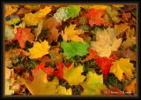 Color of Fall