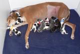 9 puppies