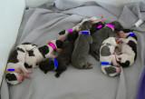 The 9 Bubba's Sleeping