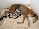 Mum's Comfy