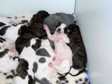 comfy pups