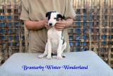 Brantarby Winter Wonderland