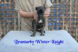 Brantarby Winter Knight