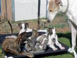 Pups respecting Miller