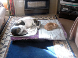 Sybil and Warrior 28/3/2012