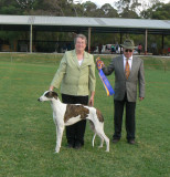 Puppy In Specialty Show April 2012