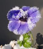 Flowers in December!